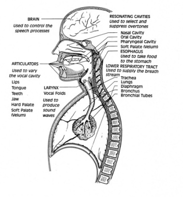 Anatomy-of-Speech-Graphic